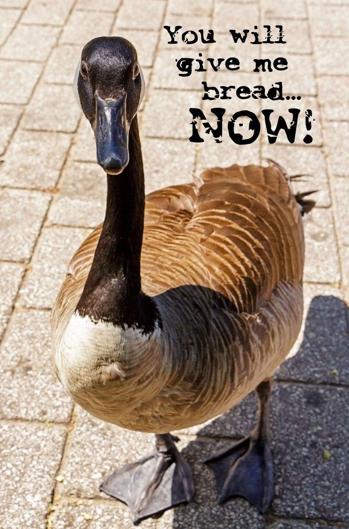 Beggar Goose