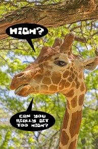 High Giraffe