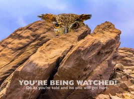 Owl Watching You