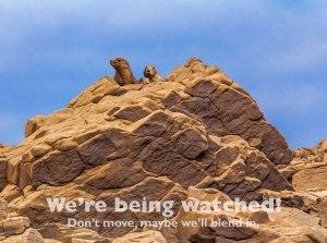 Prairie Dod Rock