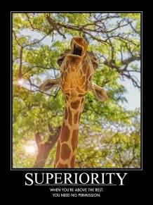Superior Giraffe
