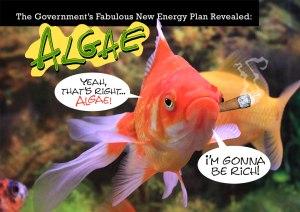 Algae Fish Blog