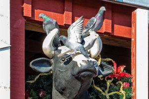 Cow and Pigeons-Blog