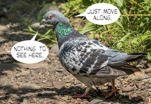 Pigeon-drugs