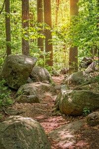 Ringing Woods