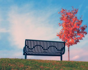 Lonely Bench and Tree