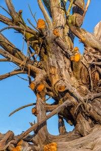 Chainsaw Driftwood