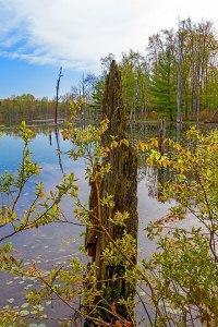 Dam Swamp