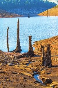 Dead Swamp Trees