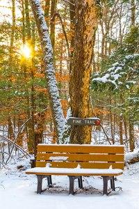 Pine Trail Bench