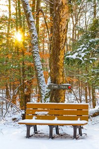 Pine Trail Bench