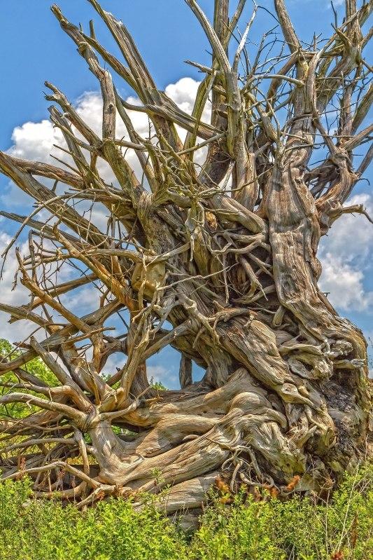 Spider Driftwood
