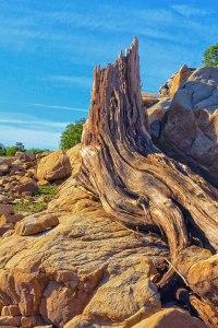 Tree Stump Supreme
