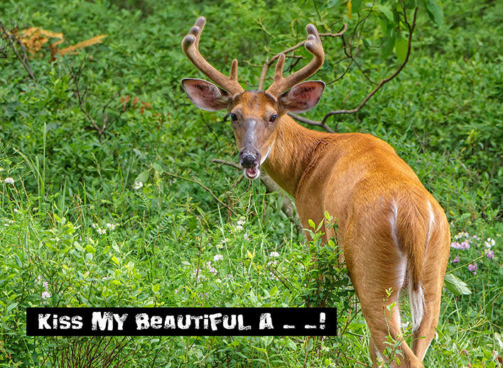 Deer-Butt-1