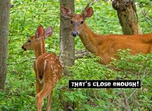 Mama-and-Baby-Deer