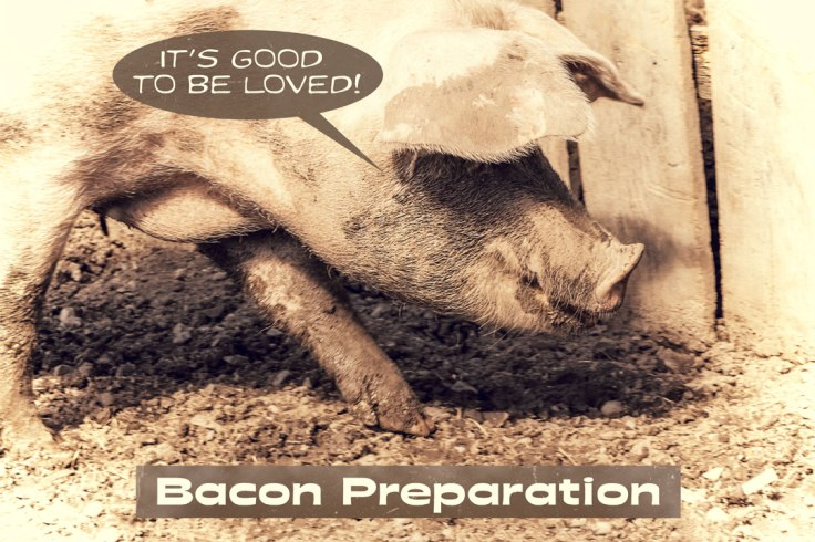Pig-Bacon-Blog