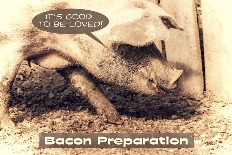 Pig-Bacon-Blog