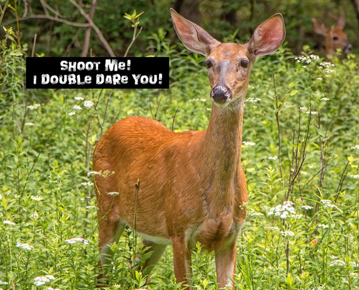 Shoot-Me-Deer