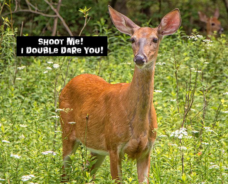 Shoot-Me-Deer