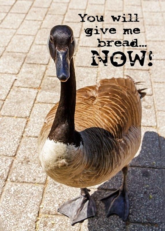 Beggar-Goose-Card