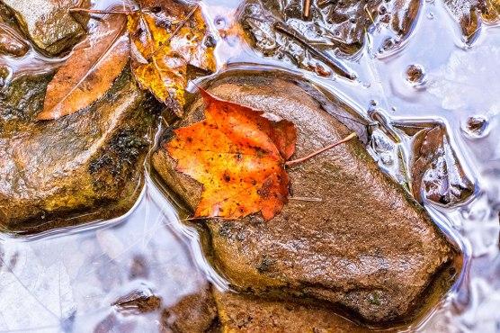 Fall-Leaves-on-Rocks