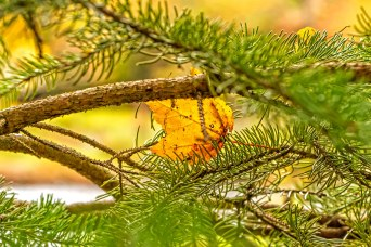 Fall-Yellow-Leave-In-Trees