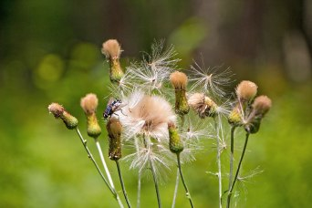Fly-and-Weeds