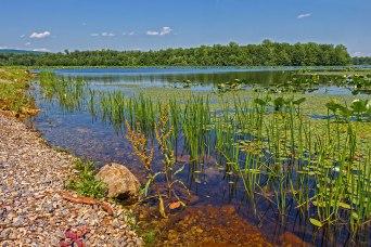 Lake-Minsi-Weeds-2