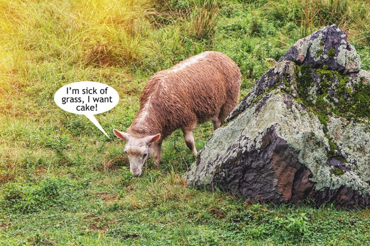 Sheep-Hates-Grass