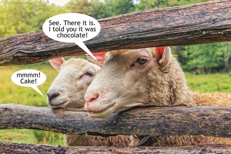 Sheep-See-Cake