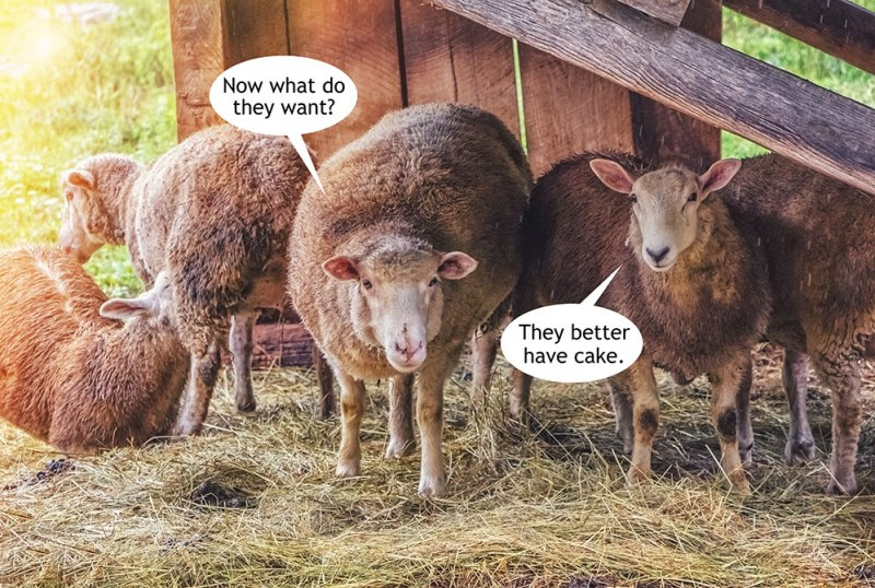What-Sheep-Want