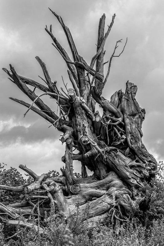 Driftwood 1