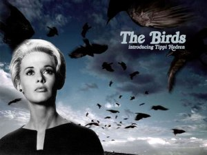 Birds-Movie-1