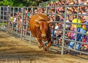 Charging-Bull