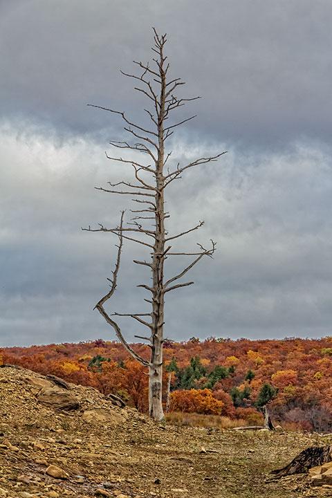 Dead-Tree-Poster