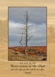 Dead-Tree-Sympathy-Card