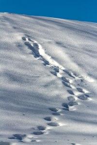 Snow-Tracks