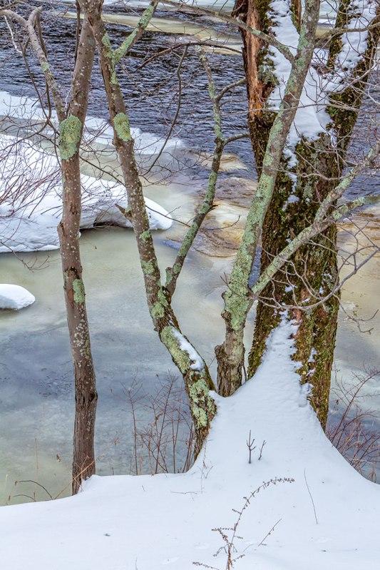 Snow-Tree-1