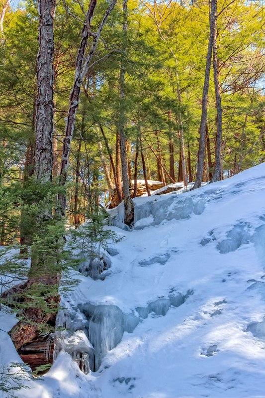 Bear-Creek-Trees-1