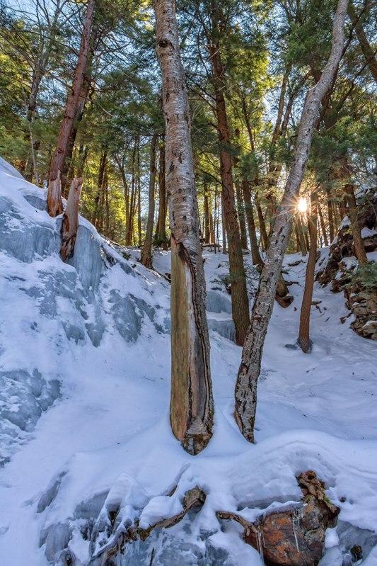 Bear-Creek-Trees-2