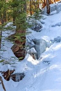 Bear-Creek-Trees-3