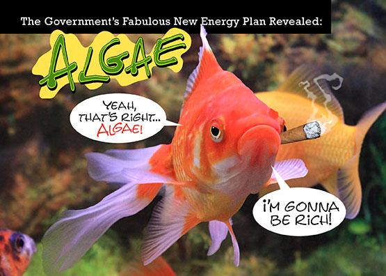Algae-Fish-Card
