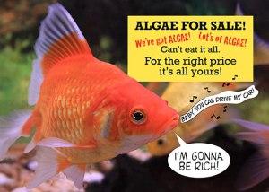 Fish-Sells-Algae-Card