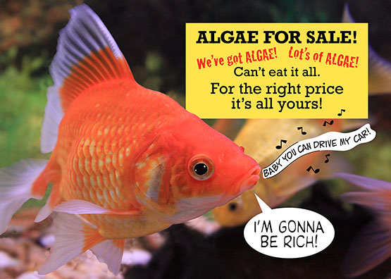 Fish-Sells-Algae-Card