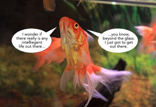 Fish-Wonders