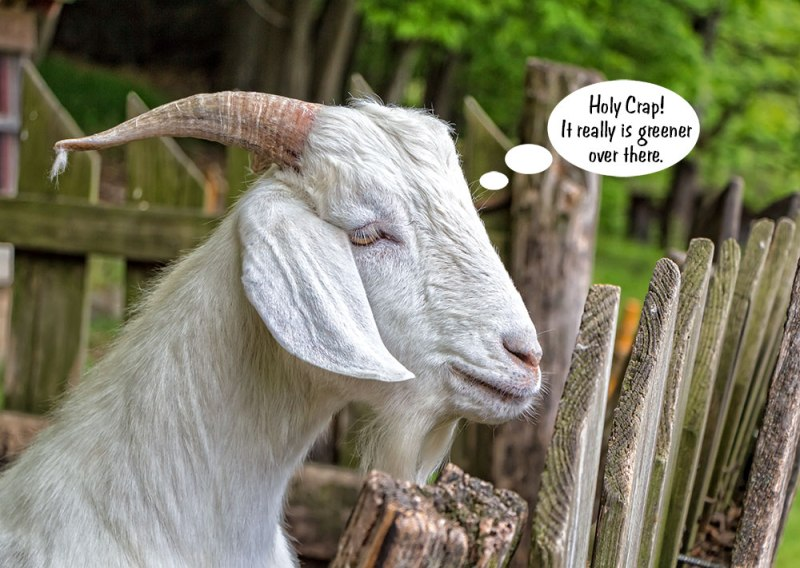 Greener-Goat