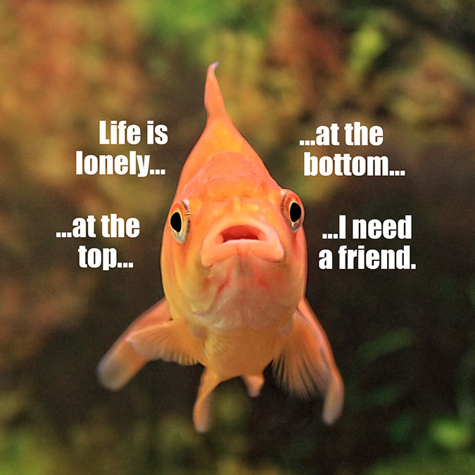 Lonely-Fish-Button