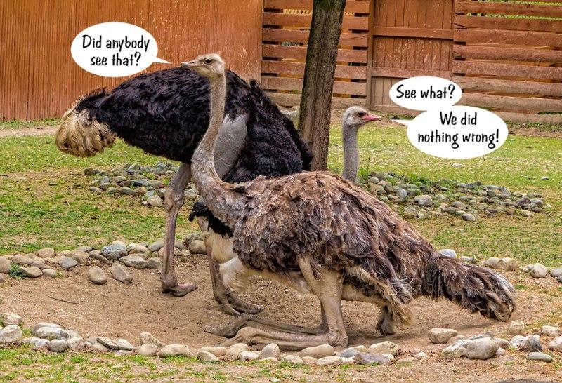 Sexy-Ostriches