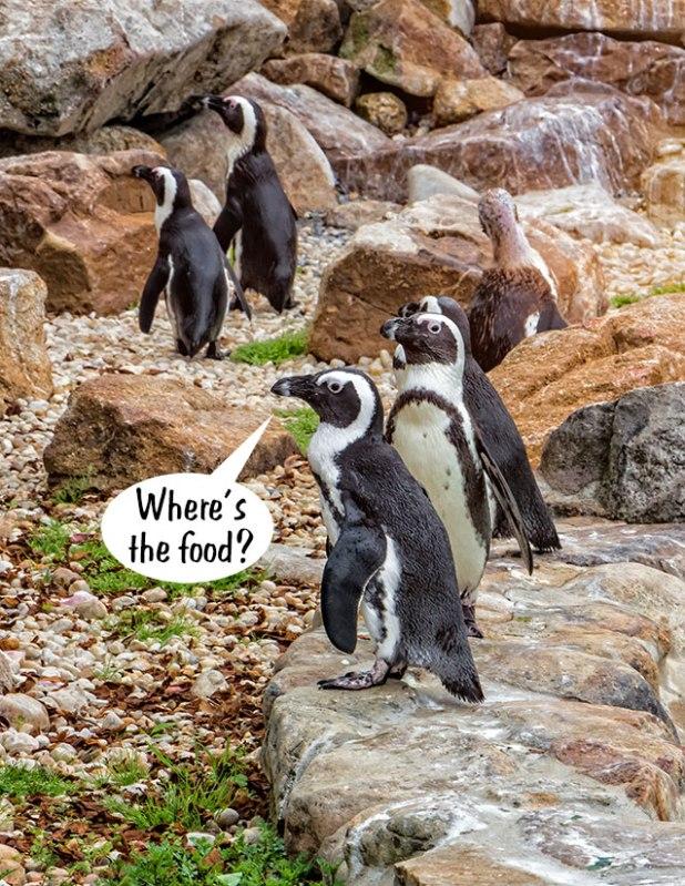 Socialist-Penguins