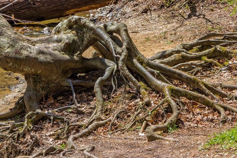 Tree-Alien